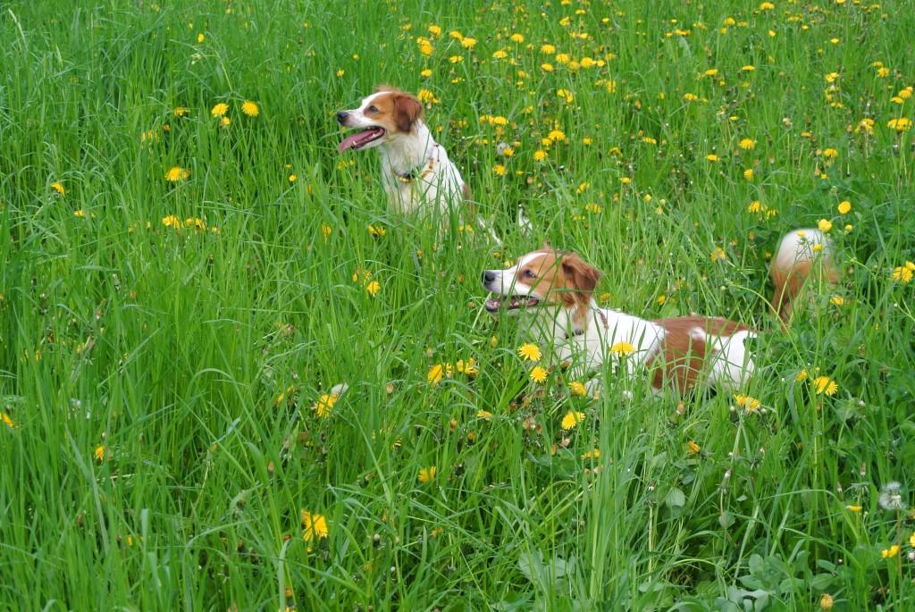 Baira und Avery im tiefen Gras
