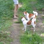 Hundehochzeit 3. August 2013