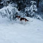 Ari im Schnee
