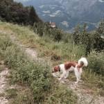 Ari in Südtirol