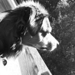 Arno (2)