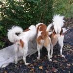 Baira, Avery und Arno