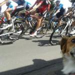 Arno bei der Tour de France