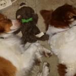 Schlummernde Hunde