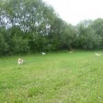 Avery, Baira, Briella und Chester