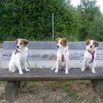 Amara, Avery und Baira
