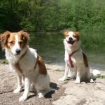 Avery und Baira am Waldsee