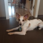 Cherie (2)