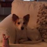 Cherie (4)