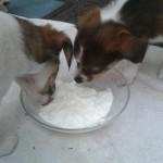 Celine und Colette mit Joghurt