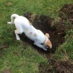 Coco hilft bei den Gartenarbeiten