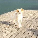 Coco lebt am berühmtesten See der Schweiz