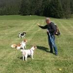 Hundeschule bei Cody