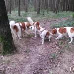 Merlin, Asko, Baira und Asti