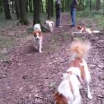 Kromitreff im Lichtenauer Wald
