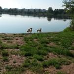 beide am Ufer