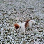 das Weiss ist Schnee