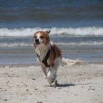 Er liebt das Meer, den Strand