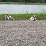 die Mädels halten Siesta am Rheinufer
